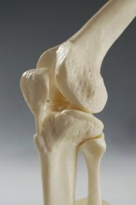 Das Kniegelenk ist das größte Gelenk im Körper.